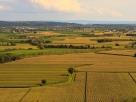 Corn fields in the Isonzo plain