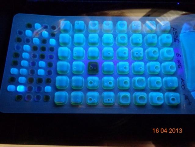 Foto 3: Colilert-18/Quanti-Tray/2000 sotto illuminazione UV